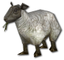 MiniSheep