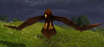 Grainhunter Hawk