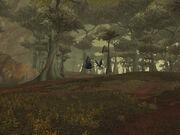 Raven's Wood
