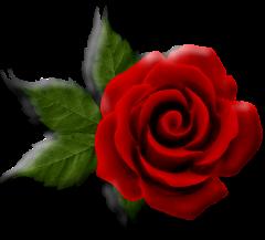 File:Beautiful rose art.png