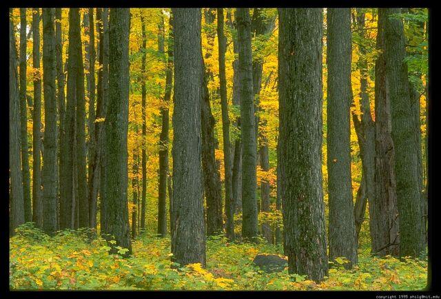 File:Treetopia.jpg