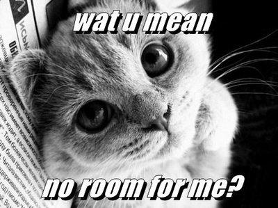 No room kitty