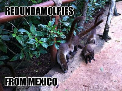 Redundamolpies