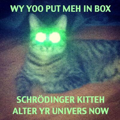 40202 all-yr-quantum-belongz-2-us