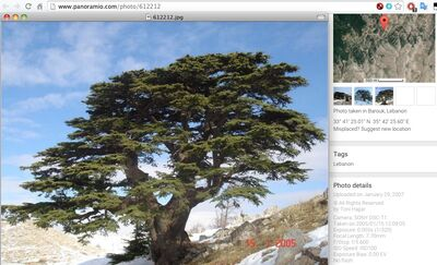 Tree-resized-with-tags