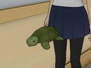The little turtle plushie flying at the light music club