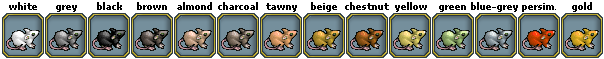Pets-Rat colors