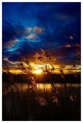 File:Golden Sunset by XipnosS.jpg