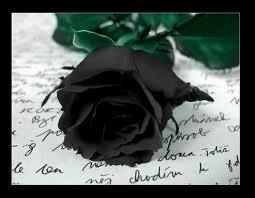 File:Black rose 2.jpg