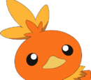 May's Torchic