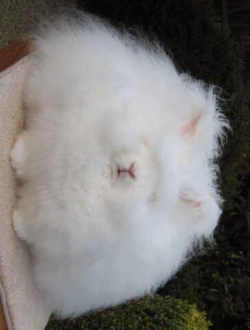File:Razorless easter bunny.jpg