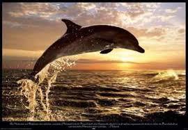 File:Delfin.jpg