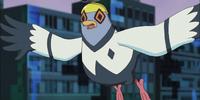 Pigeon/Gallery