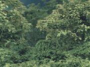 Grace Forest