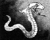 File:Lightserpent-EN-Manga-ZX-CA.png