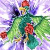 BirdofRoses-TF05-JP-VG