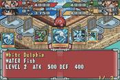 WhiteDolphin-DBT-EN-VG