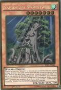 SylvanSagequoia-PGL2-PT-GUR-1E