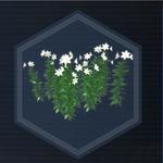 Plant 20