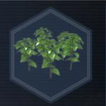 Plant 31