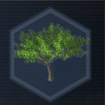 Tree 9