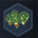 Plant 32