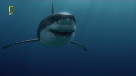 Prehistoric Predators Monster Shark