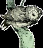 Owl Artwork 4 (Link's Awakening)