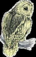 Owl Artwork 2 (Link's Awakening)