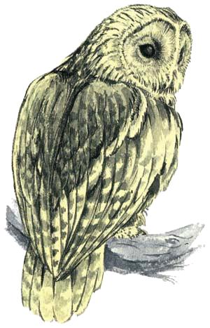 File:Owl Artwork 2 (Link's Awakening).png