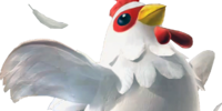 Cucco Feathers