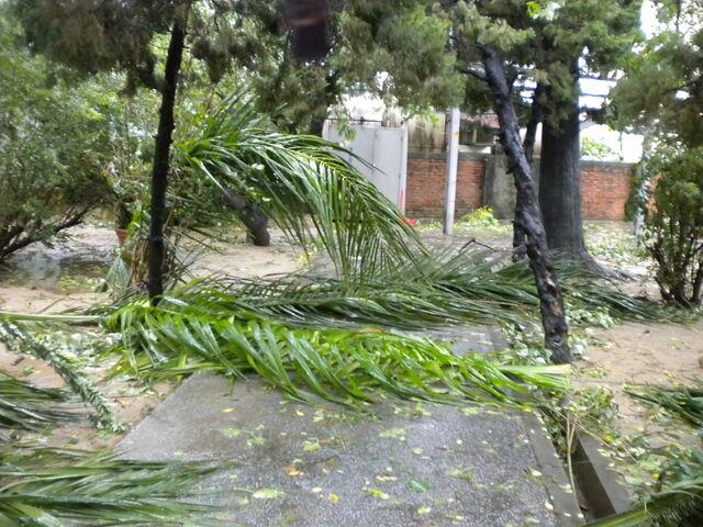 檔案:凡那比颱風的摧殘-南台科技大學6.jpg