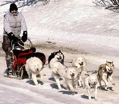 File:Dog sled one.jpeg
