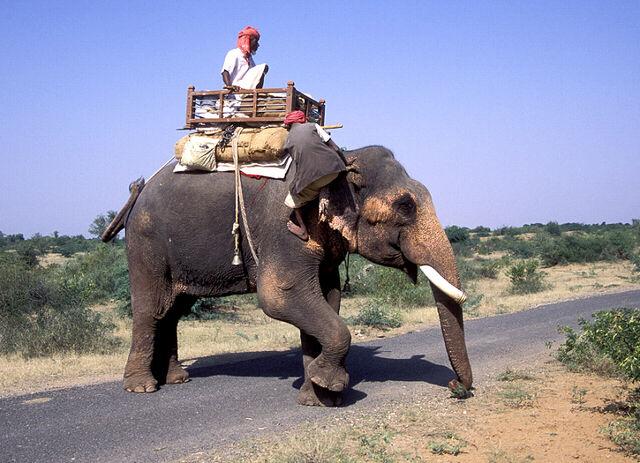 File:Elephant rider - india.jpg