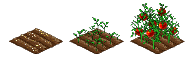 Tomatoe stages