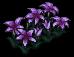 Violet Flower Bed