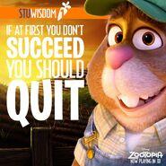 Stu Wisdom 1
