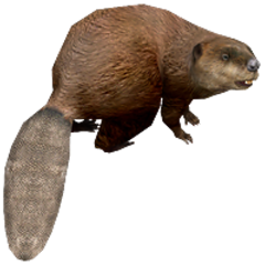 American Beaver remake.