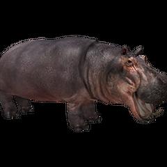 Hippopotamus remake.