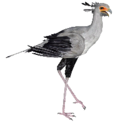 Secretary Bird remake.