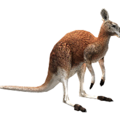Red Kangaroo remake (male).