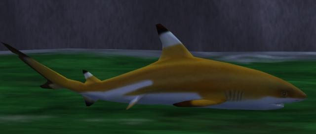 File:Blacktip Reef Shark.png