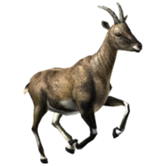 Ibex remake (female.)