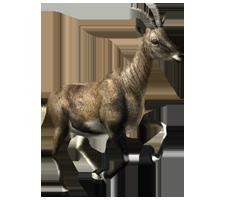 File:Apline Ibex (Female).png