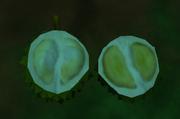 ZT2 Opened Durian