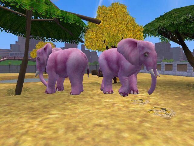 File:ElephantPink.jpg