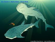 ZT2 MM - Whale Shark