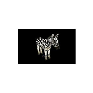 Another Zebra variant by NB68.