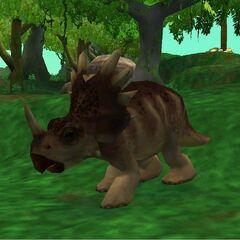 Female <i>Styracosaurus</i> (Extinct Animals)