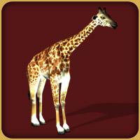 File:GiraffeMasai Adult F.jpg